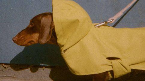 Tu perro será el mejor vestido: palabra de Zara y de su nueva colección