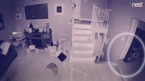 ¿Realidad o fake? El vídeo viral de los fantasmas de un niño y su perro