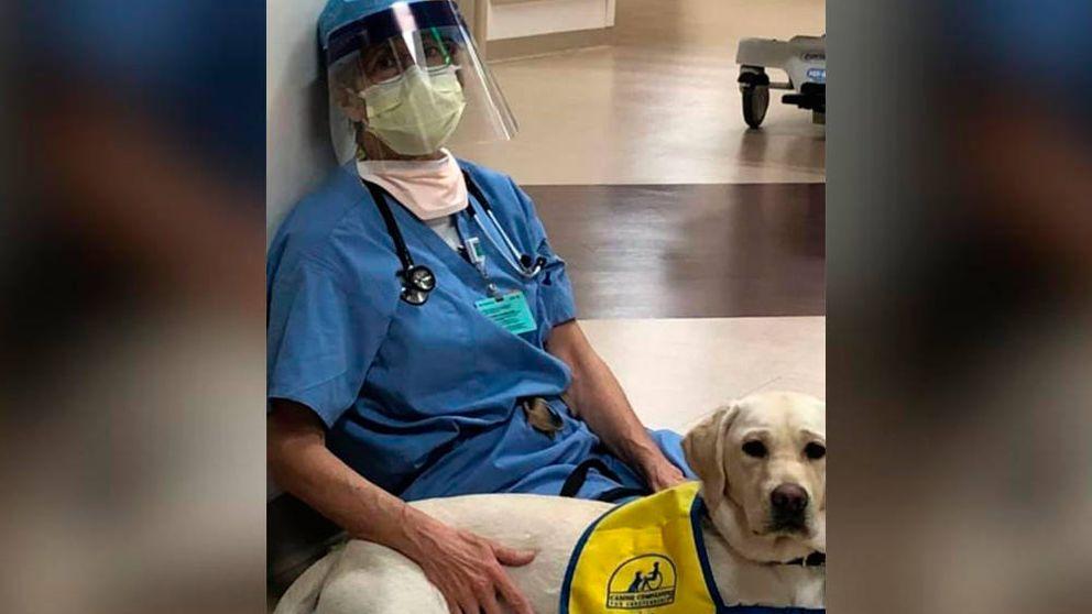 Perros de terapia ayudan a animar a los sanitarios extenuados por el coronavirus