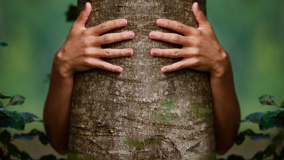 El biólogo que asegura que los árboles hablan un idioma que podemos aprender