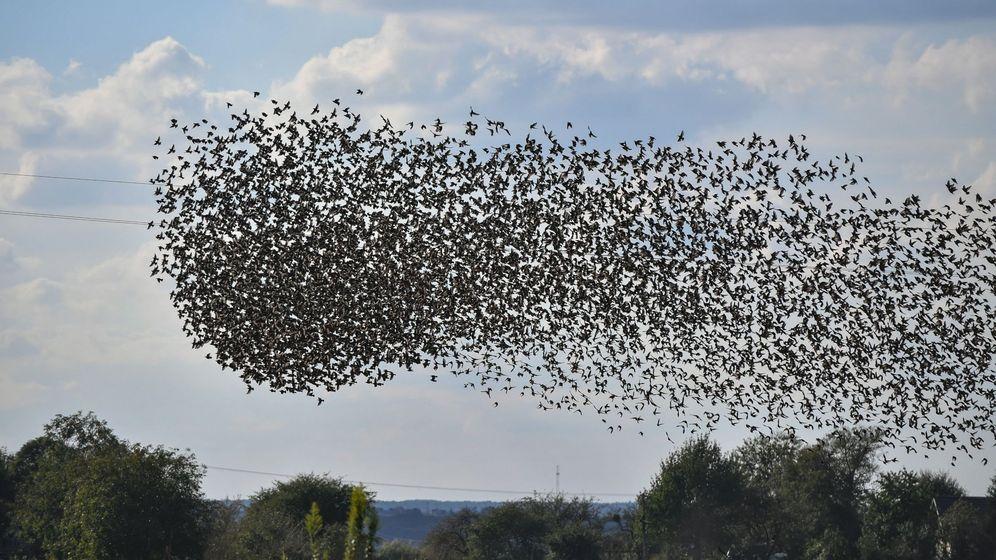 Foto: Aves migratorias. Foto: EFE Wojtek Jargilo