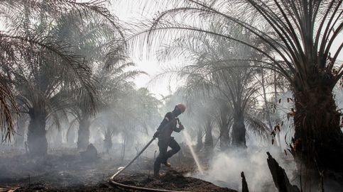 La expansión del cultivo de aceite de palma amenaza a los indígenas indonesios