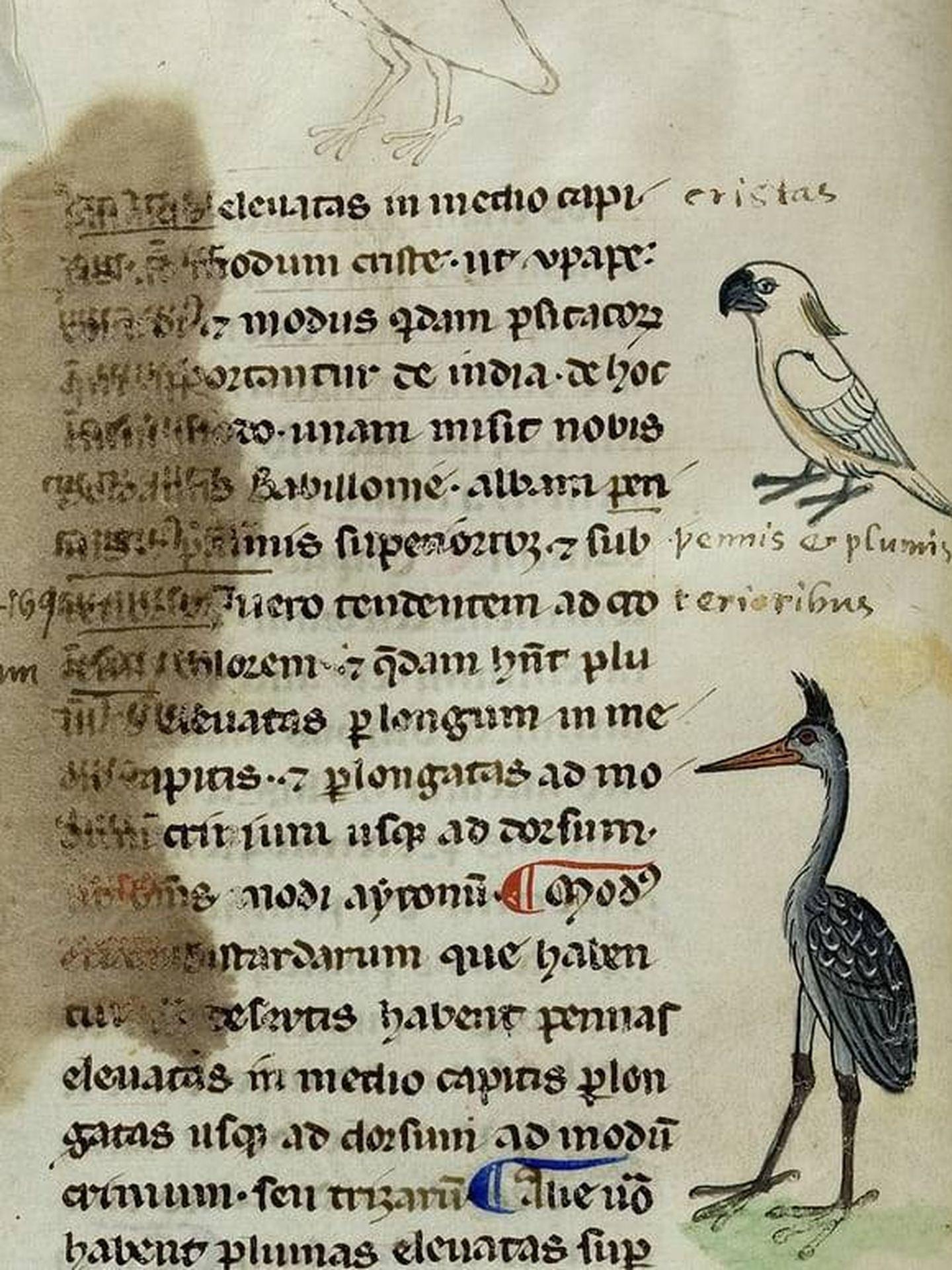 Una página del manuscrito con las aves dibujadas en sus márgenes. (Biblioteca Apostólica Vaticana)