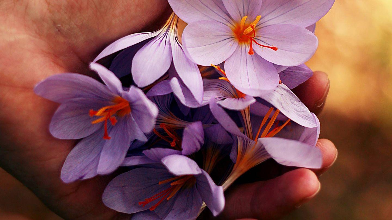Las flores y sus aromas ayudarán a tu piel. (Unsplash)