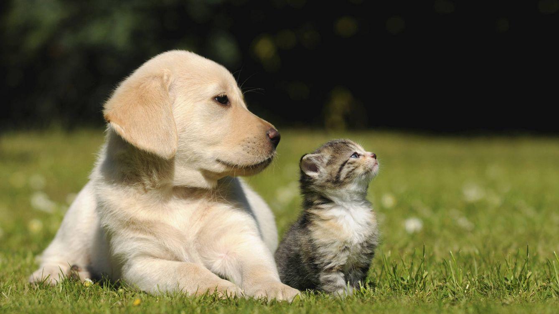 Las diferencias de personalidad entre las personas que viven con perros y con gatos