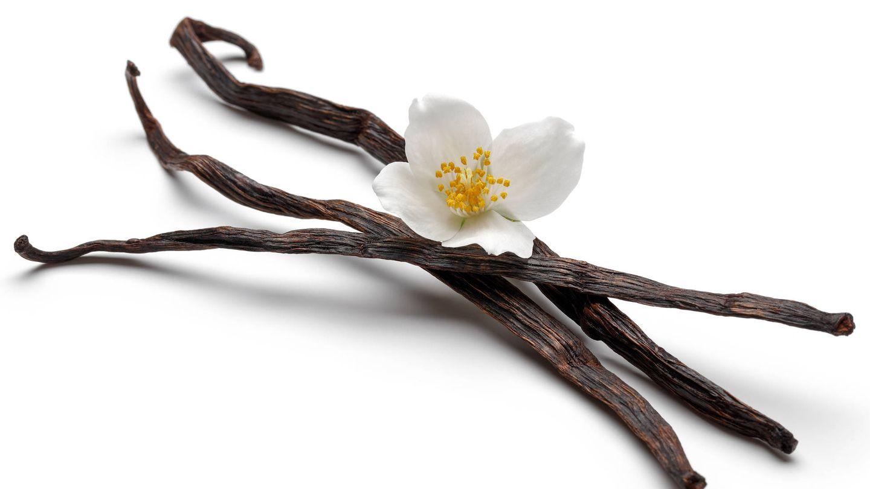 Flor y ramas de vainilla. (iStock)