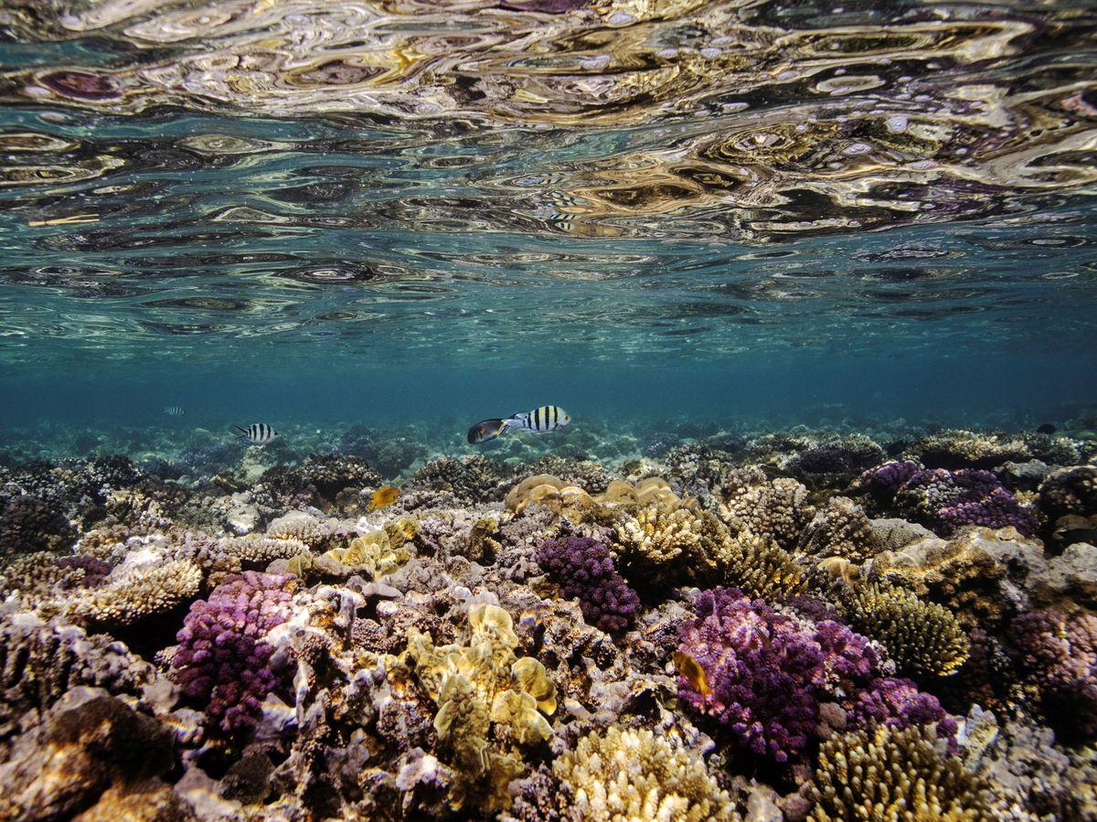 Foto: Arrecife de coral en el Mar Rojo. Foto: Reuters