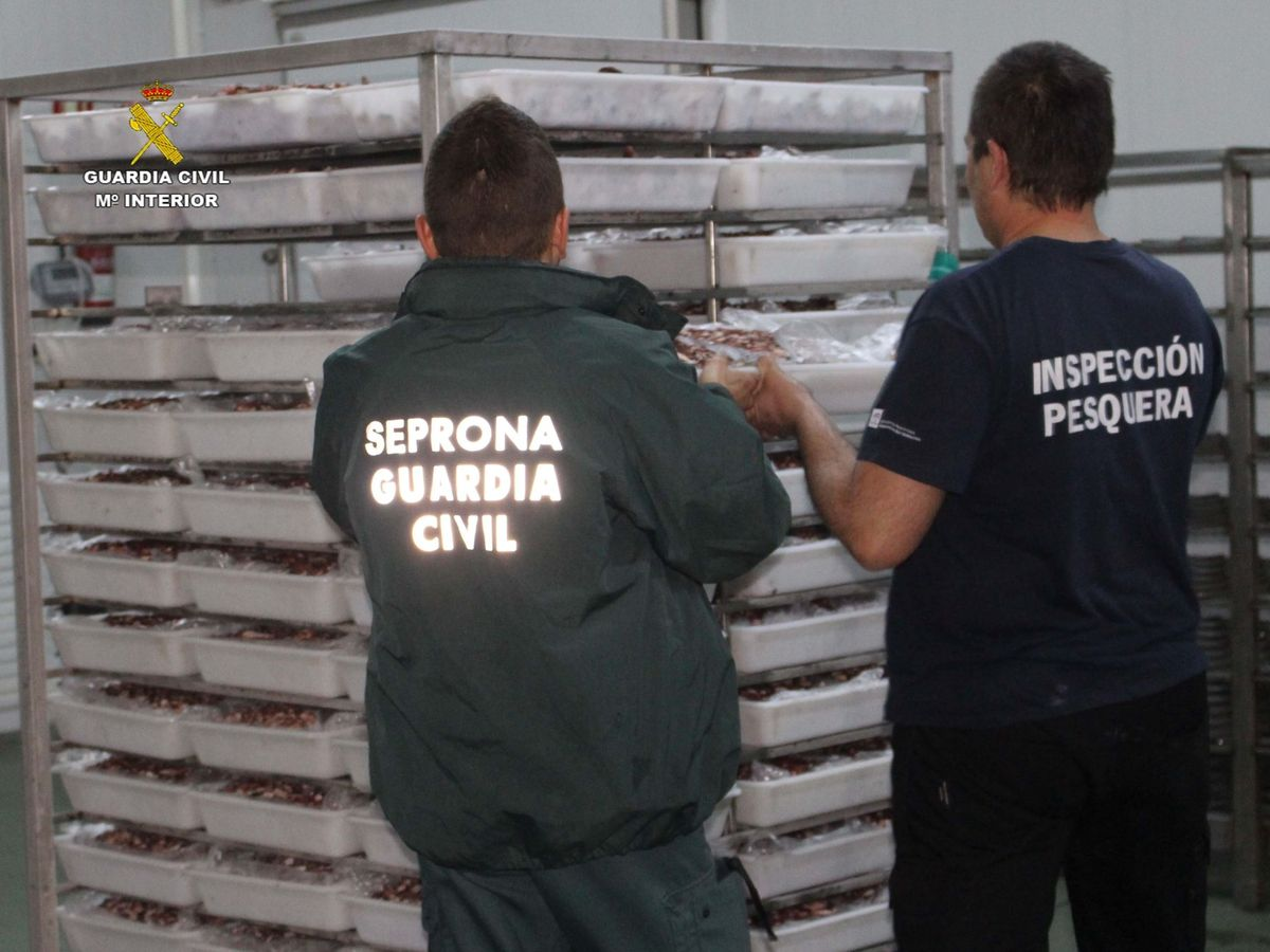 Foto: Intervención pesquera del Seprona, en una imagen de archivo. (EFE)