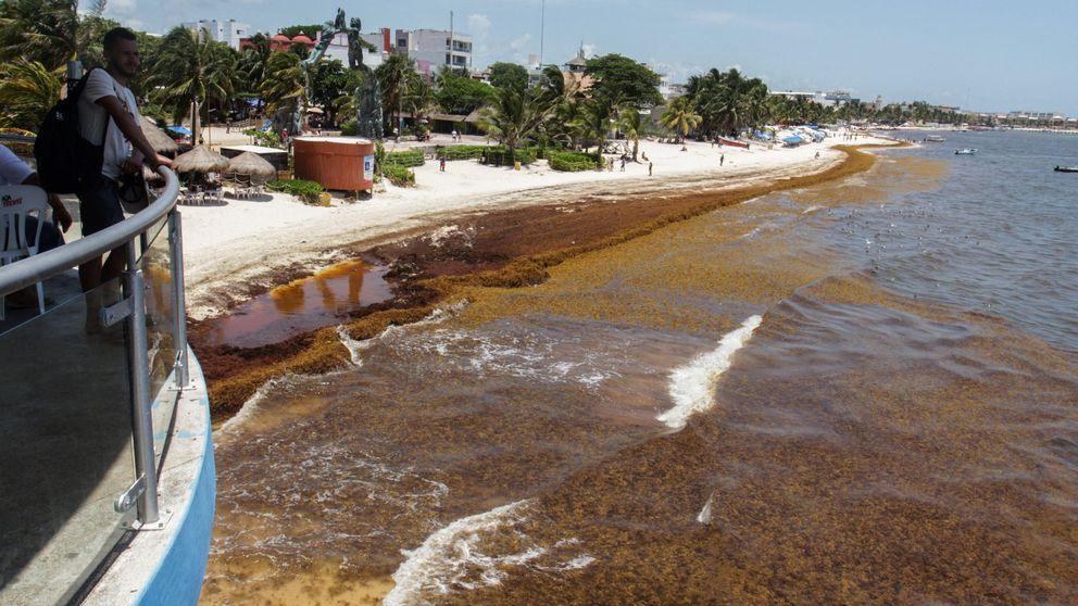 ¿Qué pasa en el Caribe? Los hoteles españoles no dan la talla en su mercado clave
