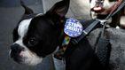 """Cientos de perros dicen no"""" al Brexit en las calles de Londres"""