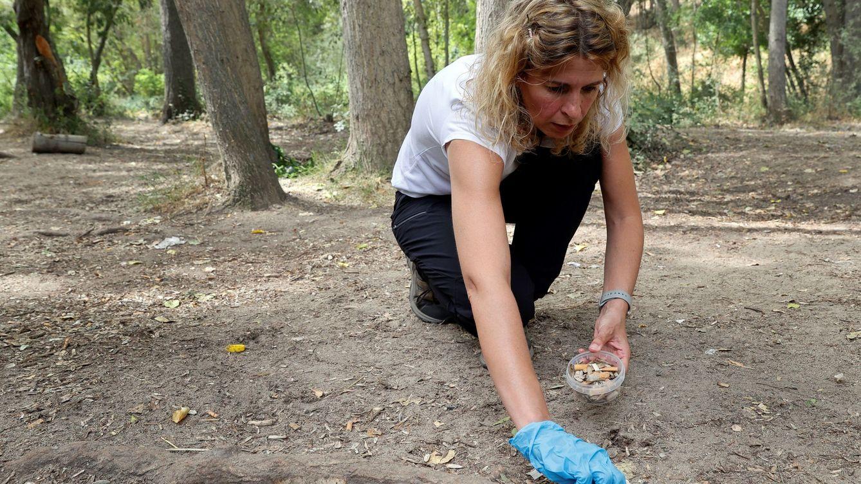 Un problema sin fin, cada minuto, ocho millones de colillas acaban en la naturaleza