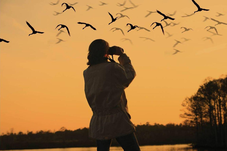 Foto: No te cortes y espía a los pájaros como todo buen 'birdwatcher'