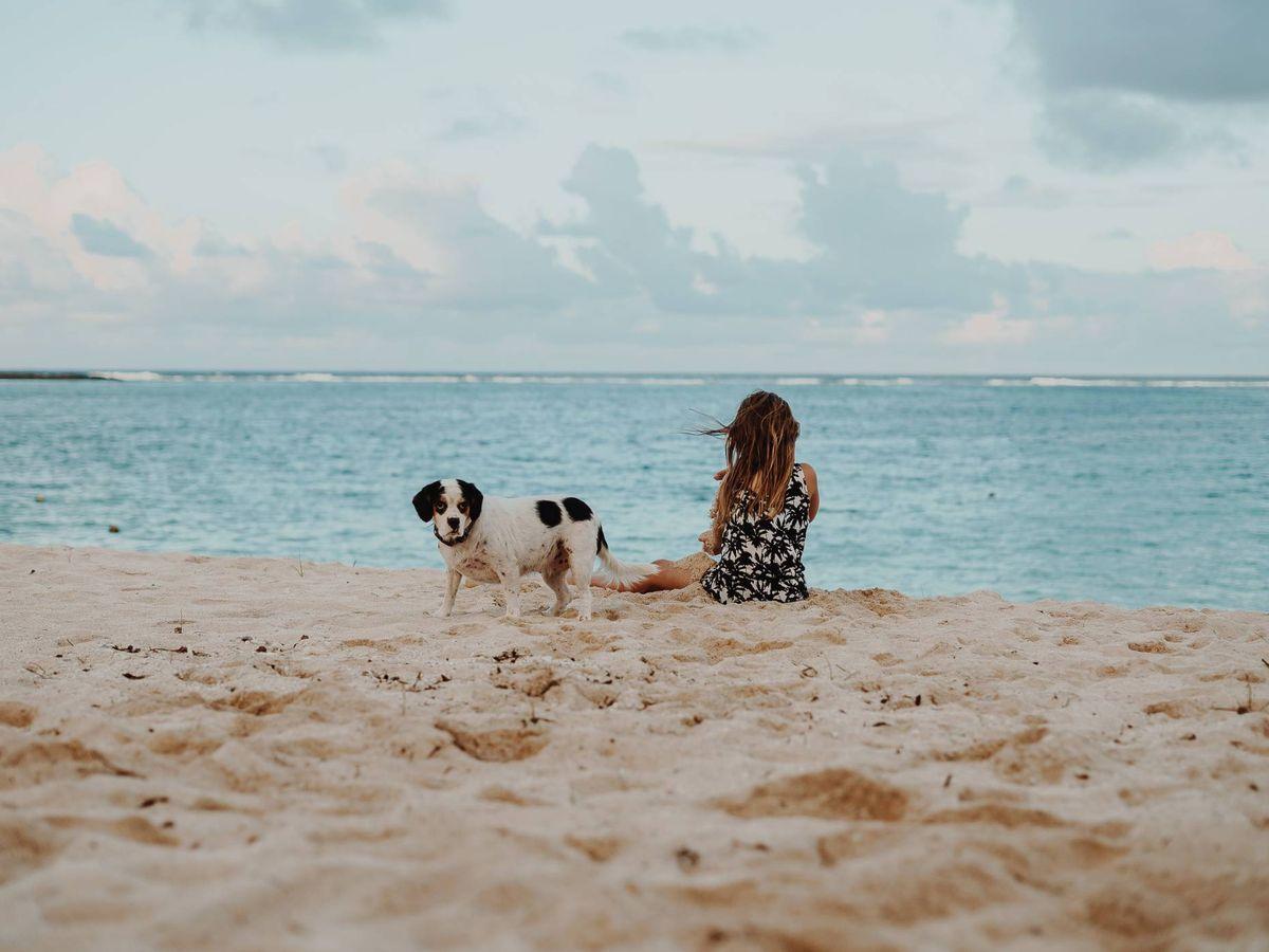 Foto: Playas para perros es España para estas vacaciones. (Wade Lambert para Unsplash)