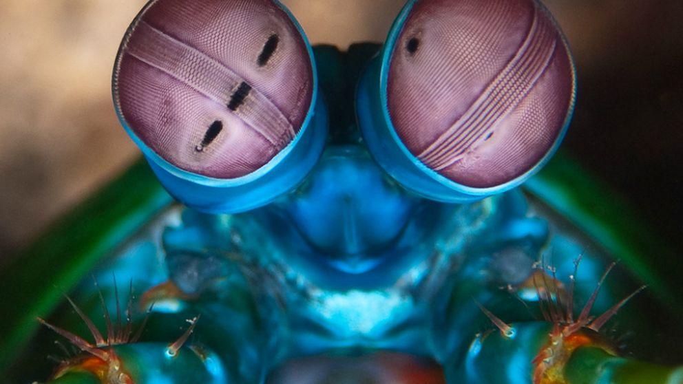 Los ojos de una gamba inspiran una cámara para 'ver' el cáncer
