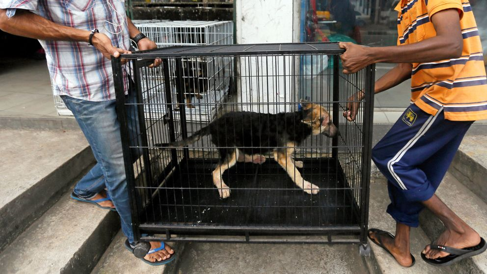 Reino Unido prohibirá la venta de cachorros de perros y gatos en tiendas