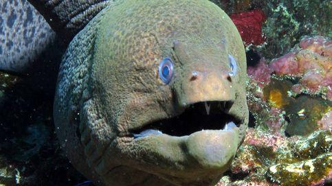 Estos científicos creen que el monstruo del Lago Ness podría ser una anguila gigante