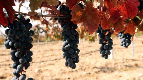 Del papel al vino... ¿Quién es la familia Isidro Rincón, detrás de Europac?