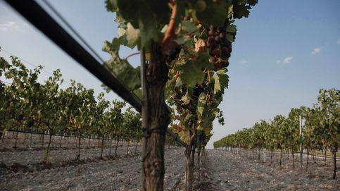 Enoturismo en la Ribera del Duero: viaje al centro del viñedo