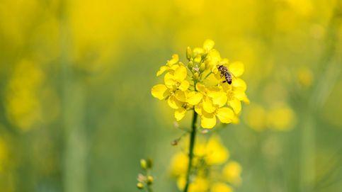 Muere un septuagenario en As Nogais (Lugo) por la picadura de una abeja
