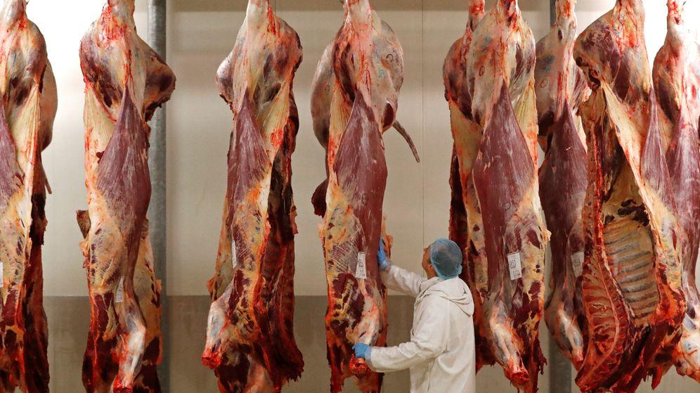 Foto: Un carnicero examina un trozo de ternera almacenado en la nevera de un matadero de Bruselas. (Reuters)