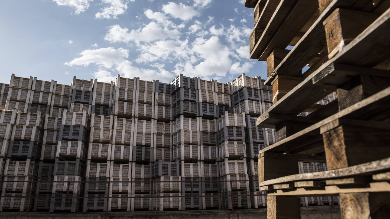 Almacén de la cooperativa de ajos San Isidro el Santo en Las Pedroñeras (Cuenca), la más grande del mundo. (N. L. P.)