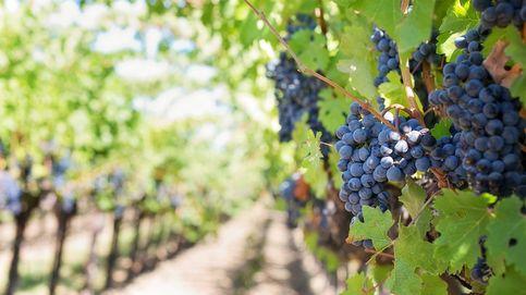 ¿Cómo ganar invirtiendo en vino?