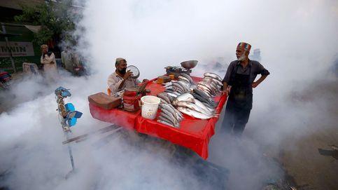 Campaña contra el dengue en Pakistán