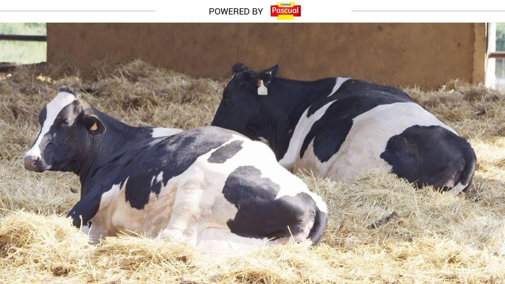 Dime cómo vive una vaca y te diré la calidad de su leche