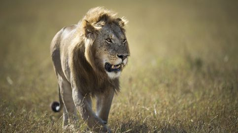 Las leyes del Serengeti: el secreto de la vida al fin desvelado