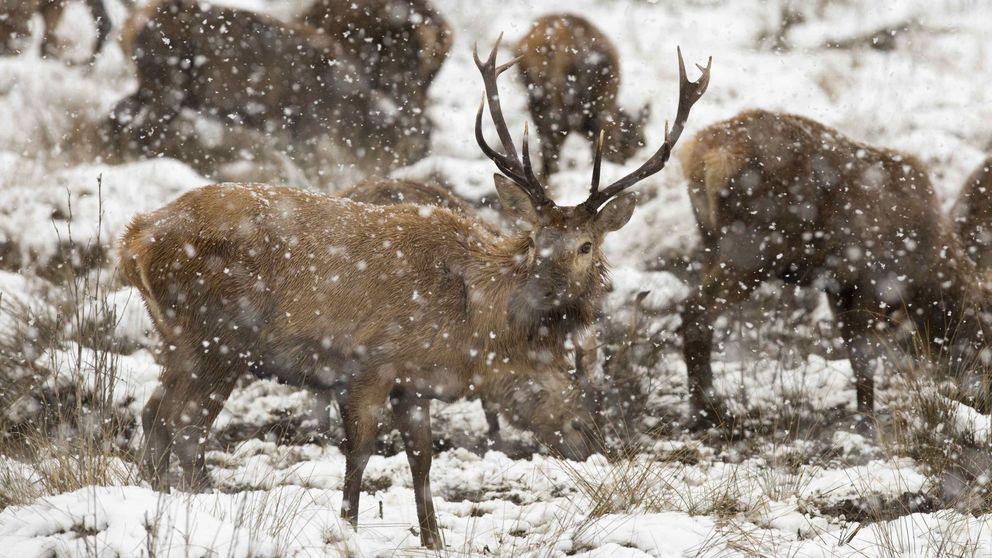Condenan a un cazador furtivo a ver 'Bambi' una vez al mes durante un año