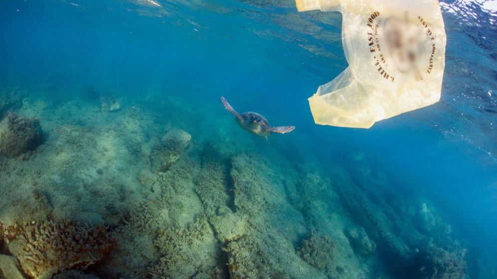 Foto:  Fotografía facilitada por Kostas Papafitsoros, de una bolsa de plástico en la bahía de Laganas (Zante). (EFE)