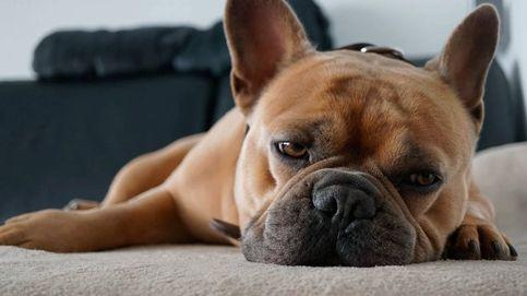 ¿Tu perro tiene insomnio? Así puedes ayudarle a dormir bien