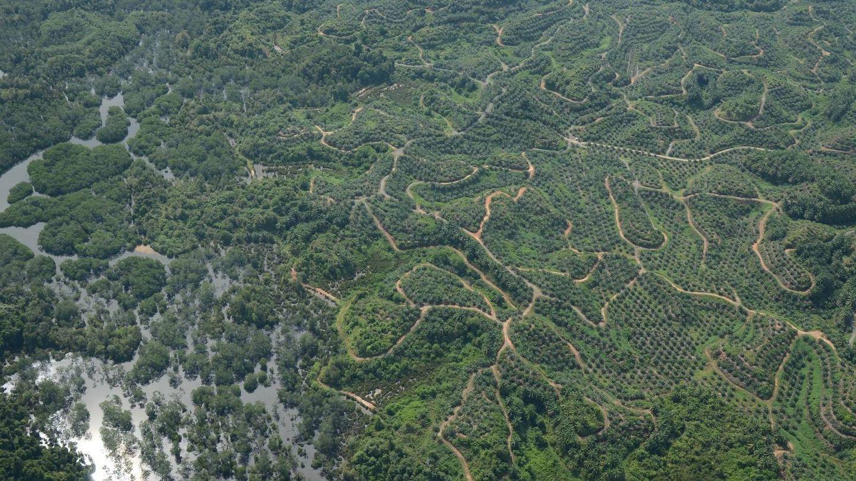Selva de Borneo interrumpida por cultivos y otras actividades humanas (Current Biology)