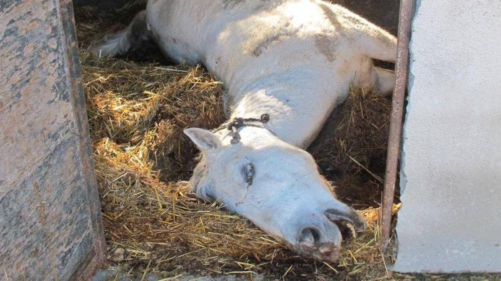 Foto: Uno de los caballos muertos. (Guardia Civil)