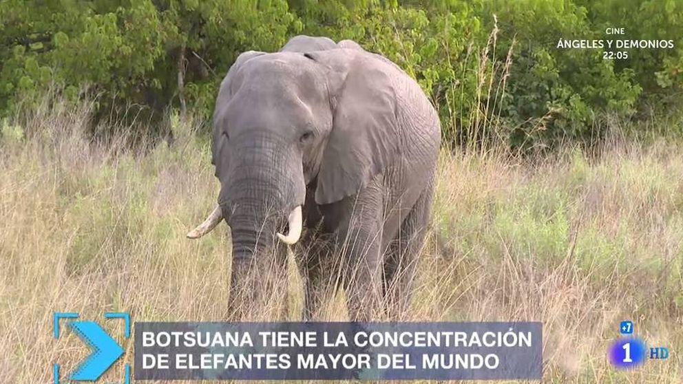 TVE se va de safari en pleno referéndum del 1-O en Cataluña