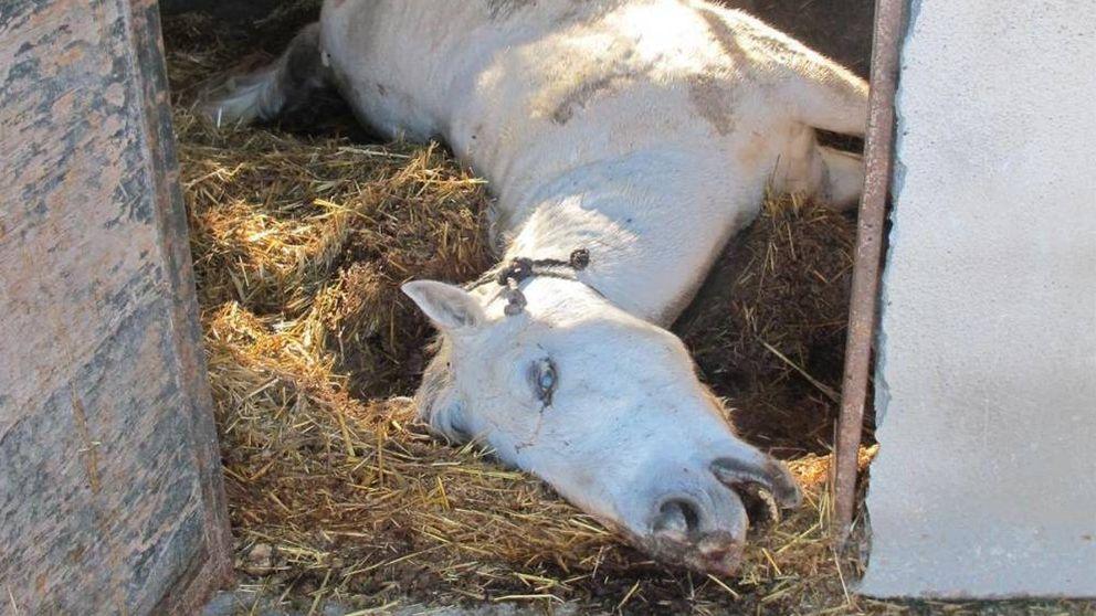Investigado en Motril (Granada) por dejar morir de hambre a caballos y ovejas