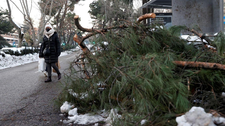 Árboles caídos en Madrid tras el paso de Filomena. (EFE)