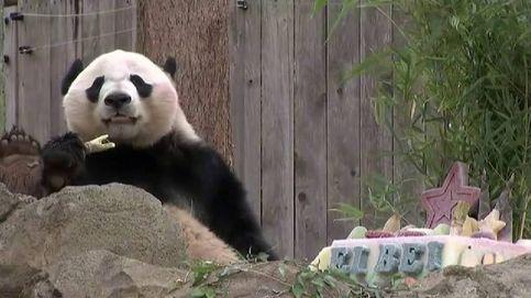 Washington se despide de su último ejemplar de panda