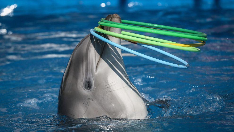 Por qué España debe prohibir los delfinarios como ha hecho Francia