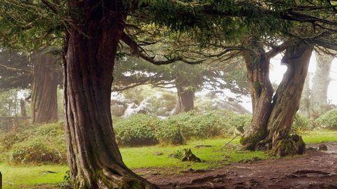Formas de huir del estrés: masajes en el bosque