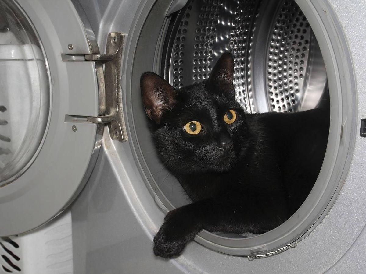 Foto: La gata de Courtney se coló en la lavadora cuando nadie miraba y se escondió entre la ropa sucia (Foto: Pixabay)