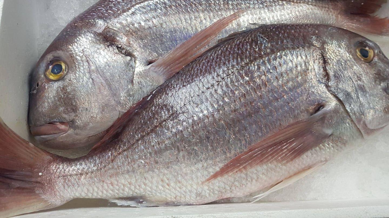 El dentón, un pescado blanco muy cotizado en el mercado se oferta en el Goizeko.