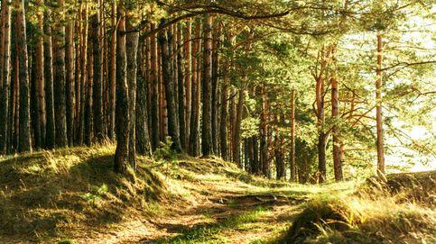 El 'Fórum Filatélico de árboles', a juicio:  el fiscal pide tres años a Bosques Naturales
