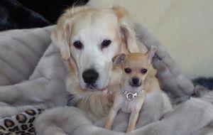 Accesorios para mascotas de lujo