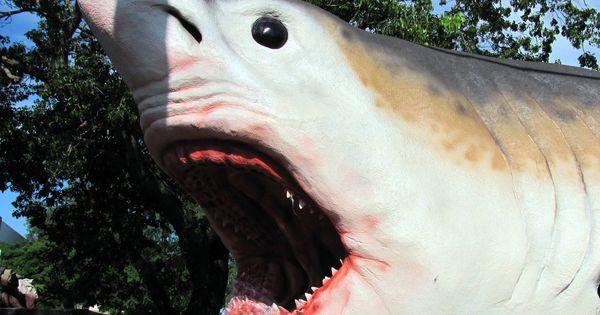 Descubierto un nuevo tiburón prehistórico (que vivió con los dinosaurios)