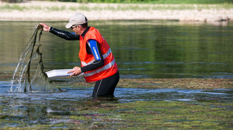 Actuación en el Ebro contra la mosca negra (EFE)