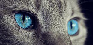 Post de Una gata enloquece y encierra a su dueña dos días en la cocina sin dejarla salir