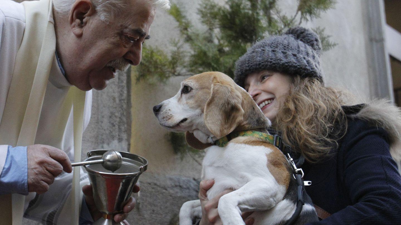 El cura de la Iglesia de San Antón de Madrid bendice a un perro siguiendo la tradición de la festividad. (EFE)