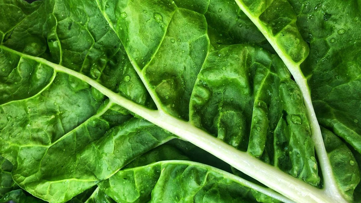 K, la vitamina que cuida tus huesos y borra las ojeras
