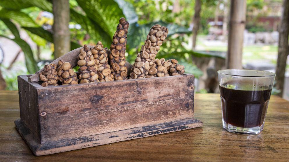 Cafés raros (y un poco repulsivos) que triunfan en el mercado gourmet